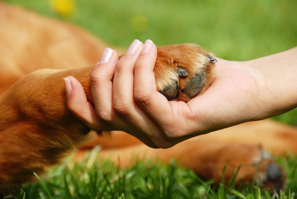 Steps to Pet Advanced Care Directives